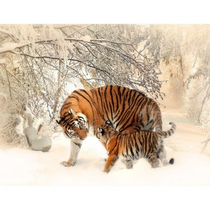 Photomural Tigers Consalnet - Studio360 13004VE