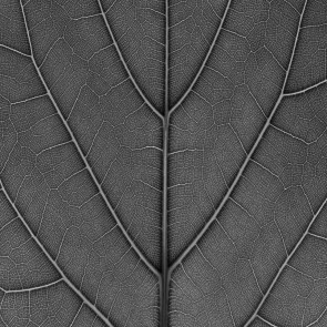 Mr Perswall Urban Natur Non Woven Photomural